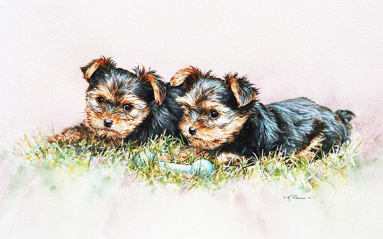 two Yorkshire Terrier pups, watercolor by Kathy Paivinen