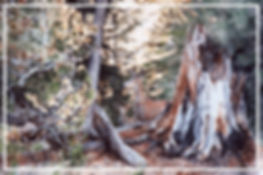 doe and fawn camouflage at Crater Lake, watercolor by Kathy Paivinen