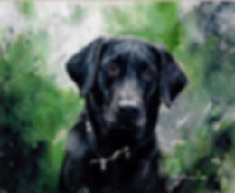 lovely expression on this black lab's face, watercolor by Kathy Paivinen