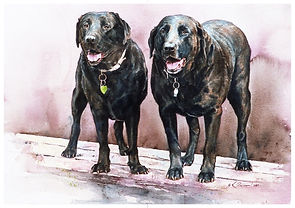 watercolor of two black labs by Kathy Paivinen
