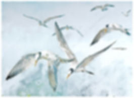 watercolor painting, Elegant Terns, juveniles and adults, Moss Landing Harbor, by Kathy Paivinen, print