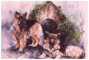 watercolor, long-haired German Shepherds