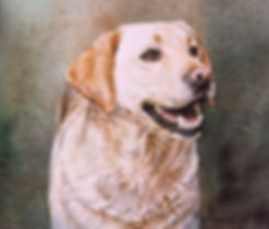 the look on this yellow lab's face is anticipation, watercolor by Kathy Paivinen