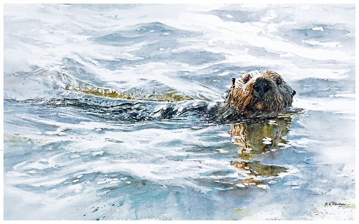 watercolor painting of a Southern Sea Otter in Elkhorn Slough, Kathy Paivinen, print