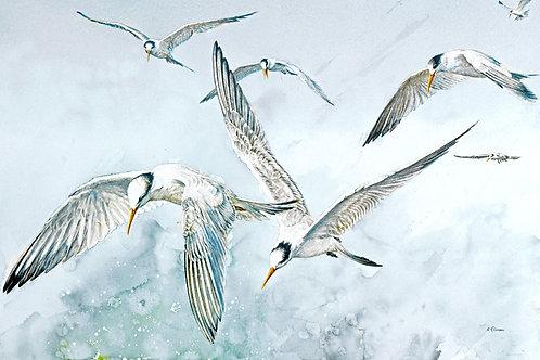"Notecard (sku #03)-""Tern, Tern, Tern"" (Elegant Terns) fine art card & env."