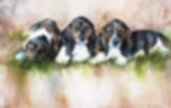 three Basset Hound puppies watercolor by Kathy Paivinen