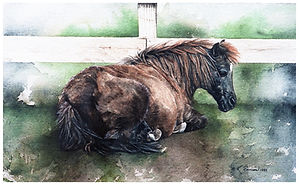 Brown pony lying down, watercolor by Kathy Paivinen