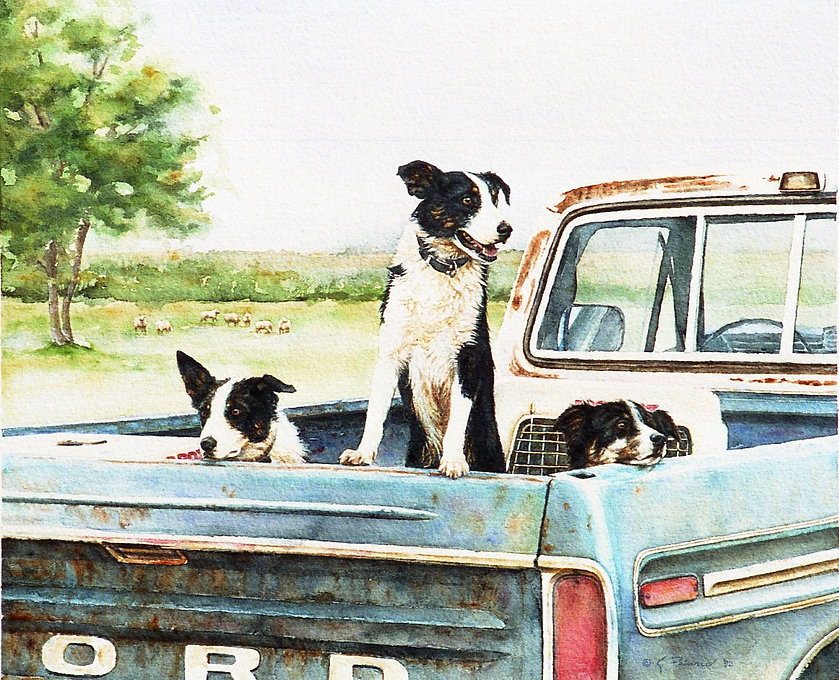 Three Border Collies in the back of a pickup truck at a herding trial, watercolor by Kathy Paivinen