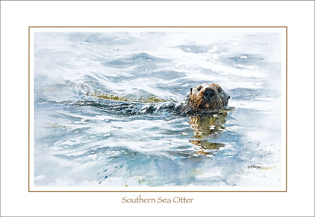Fine art poster of Southern Sea Otter, watercolor by Kathy Paivinen