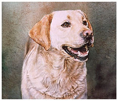 watercolor, yellow lab, Kathy Paivinen