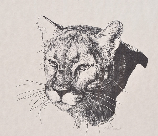 scratchboard print of Mountain Lion by Kathy Paivinen