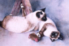 Two cats, Siamese, watercolor by Kathy Paivinen