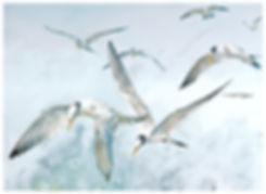 watercolor painting, Elegant Terns, adults and juvenile, Kathy Paivinen