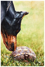 watercolor of Doberman and tortoise by Kathy Paivinen