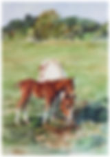 foal nibbling on Mom's ear, watercolor by Kathy Paivinen
