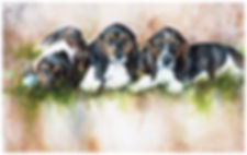 watercolor of three Basset Hound pups by Kathy Paivinen