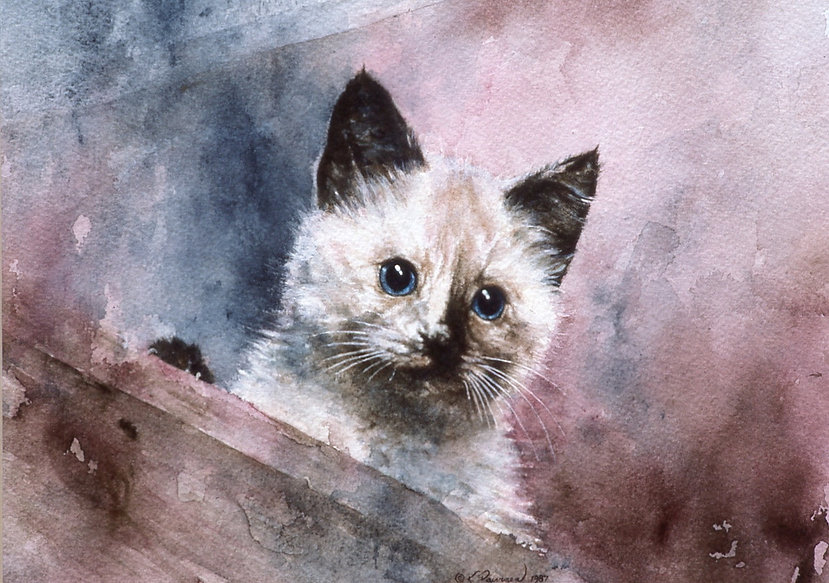 kitten looking out of a box, watercolor by Kathy Paivinen