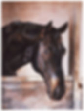 Portrait of a horse, watercolor by Kathy Paivinen