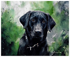 black Lab, watercolor by Kathy Paivinen