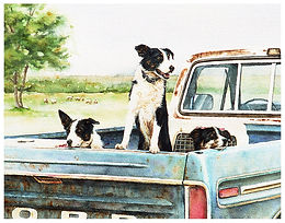 Three Border Collies in pickup truck, herding dogs waiting, watercolor by Kathy Paivinen