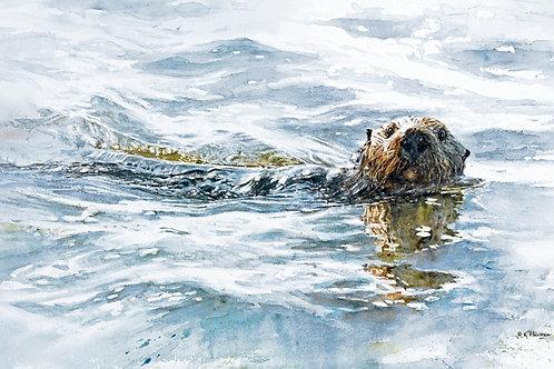 """Cruisin'"" Poster (sku #1001) Southern Sea Otter"