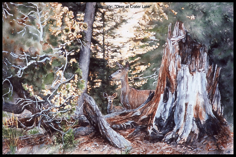 """Watercolor, """"Deer at Crater Lake"""""""