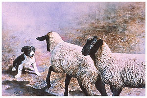 watercolor of Border Collie pup and sheep by Kathy Paivinen