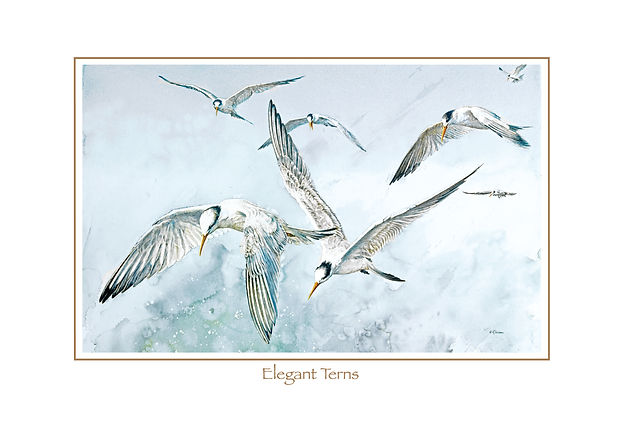 fine art poster of Elegant Terns, watercolor painting  by Kathy Paivinen