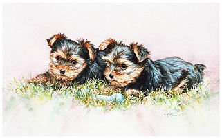 two Yorkshire Terrier puppies, watercolor by Kathy Paivinen