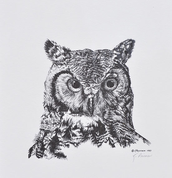 scratchboard print of a Great Horned Owl, by Kathy Paivinen