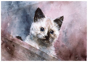 kitten looking out, watercolor by Kathy Paivinen
