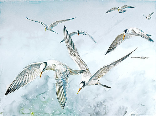 """Tern, Tern, Tern"" Fine Art Giclee Print"