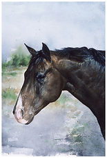 Horse portrait, watercolor by Kathy Paivinen
