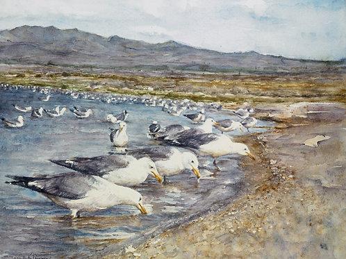 """Gulls at Mono Lake"" (painting #111), unframed"