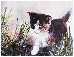 kitten exploring in the grass, watercolor by Kathy Paivinen