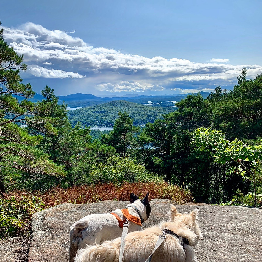 Two small dogs on the summit of Mt. Baker in the summer. Looking at lakes and mountains.