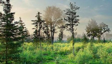 GWWA_Dec_Forest_Laurie_Johnson_web_1.jpg