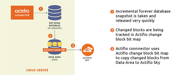 SAP HANA Actifio Mexico Q-ek Online clon en linea copia respaldo backup Rubrik