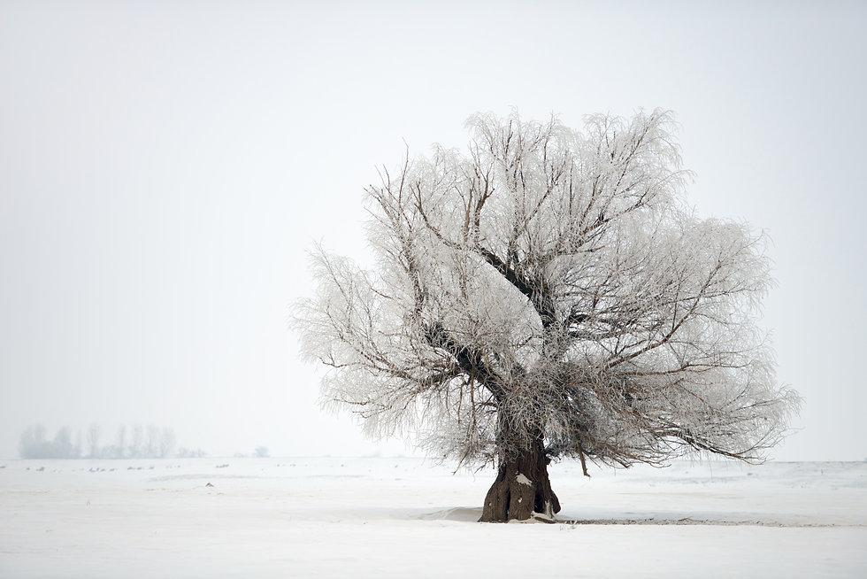 Tree in winter.jpeg