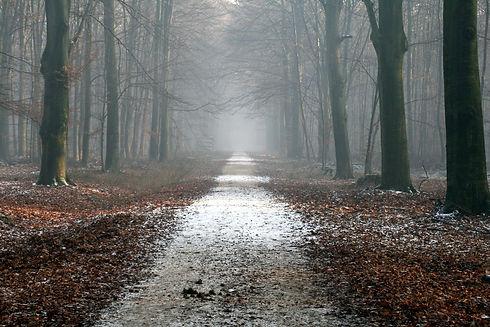 autumn-calm-creepy-dried-leaves-461763.j
