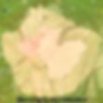 IMG_8603_edited_edited_edited_edited_edi