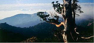 World Natural Heritage Site Yakushima's Mountain Environmental Conservation Donation program