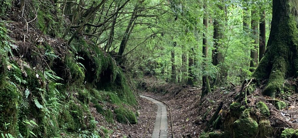 Jomon Trail