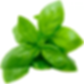 basil_leaves-small-122.png