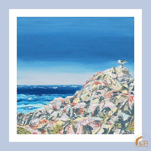 Resting Seagull: 8'' x 8'', Framed