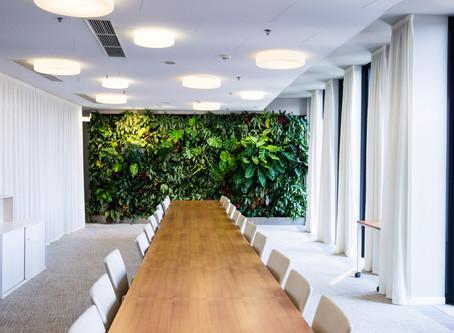Photosynthese im Büro - Mit diesen Pflanzen atmen Sie auf