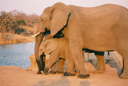elephant-and-baby.jpg