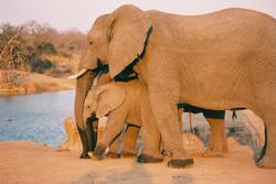 elephant-and-baby.jpg