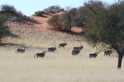 namibia-interior-2.jpg