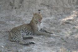 Flying Safari in Southern Africa